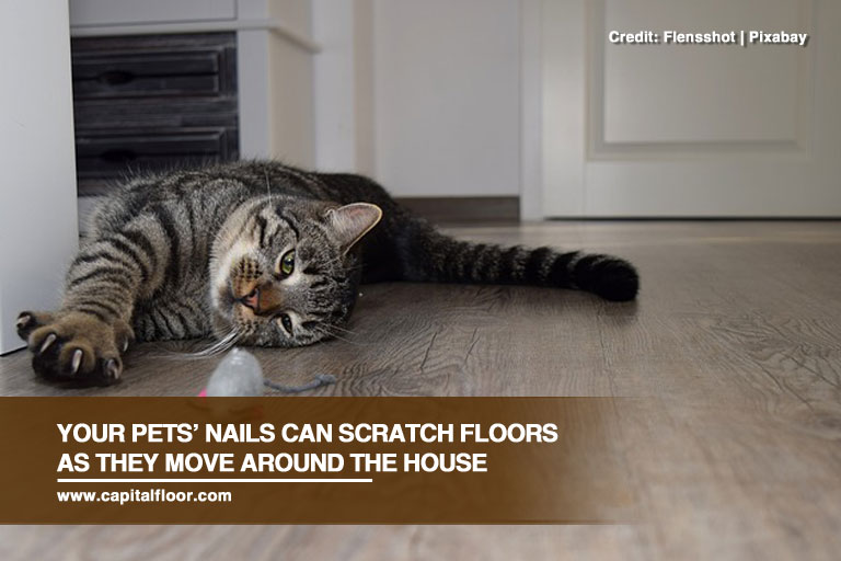 Your pets' nails can scratch floors as they move around the house